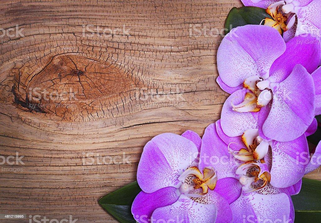 Orchidea Rosa Fiori Su Sfondo In Legno Fotografie Stock E Altre