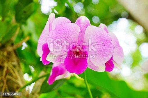 Thailand, Artificial, Beauty, Blossom, Botany