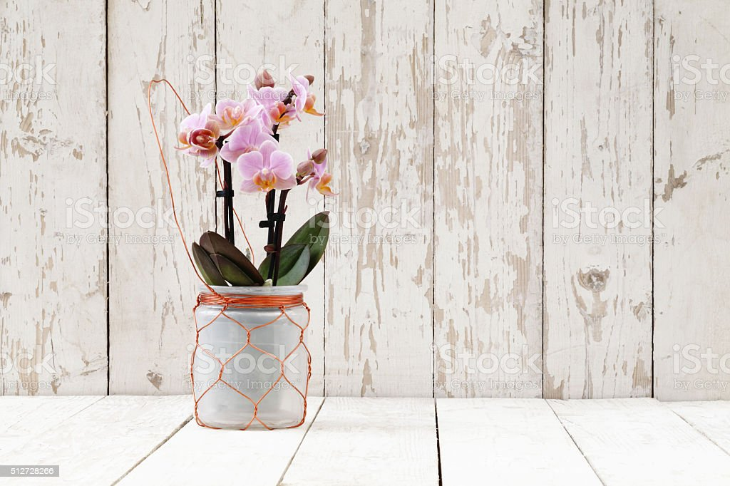 pink orchid in glass pot, on white wooden planks stock photo