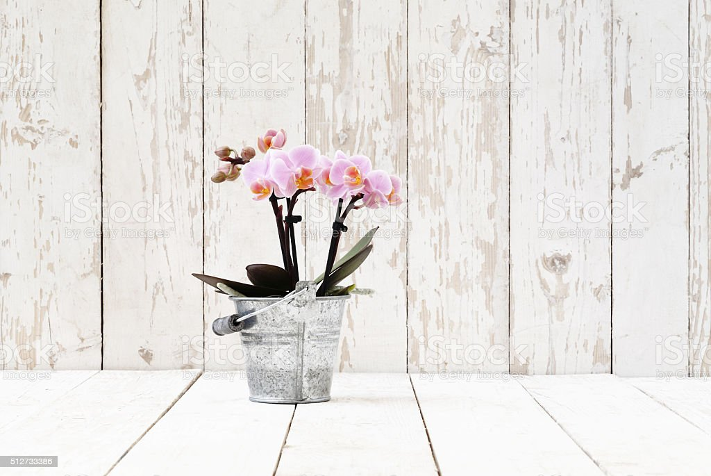 pink orchid in metal pot, on white wooden planks stock photo