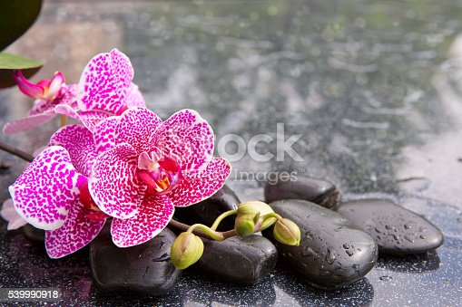 Pink orchid isolated on black background.Branch of pink orchids on a black background.