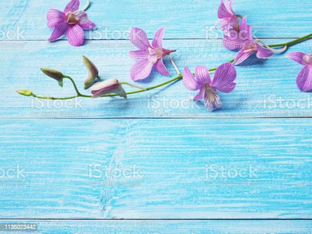 Pink orchid on blue wood table picture id1135023442?b=1&k=6&m=1135023442&s=612x612&h=rmpcksyeozpq1dnolwi59rrzsiegmb733ccci25i1oq=