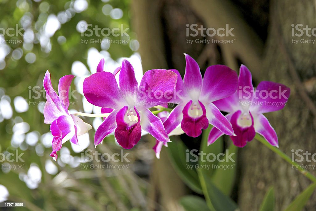 Pink orchid on tree. stock photo
