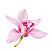 istock Pink orchid. Tropical flower branch isolated on white background. Clipping path saved 1188451432