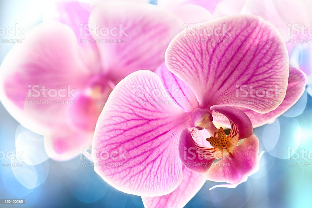 Pink orchid with bokeh background stock photo