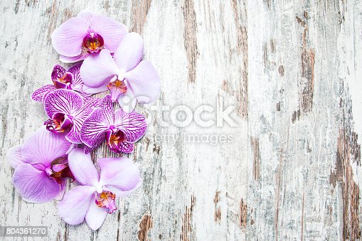 istock Pink orchids flowers 804361270