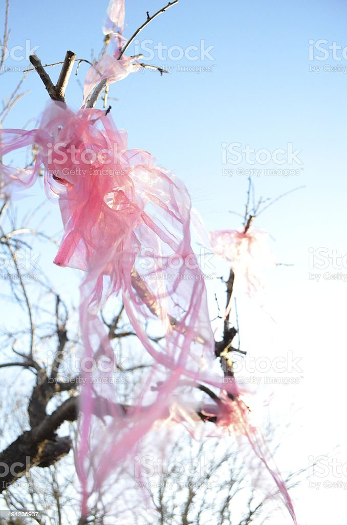 Pink organza ribbon in wintry tree stock photo