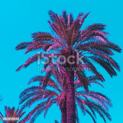 507279130 istock photo pink palm trees. bright colors. minimal and surreal. 990909848