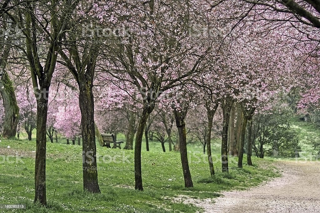 Pink park in rome royalty-free stock photo