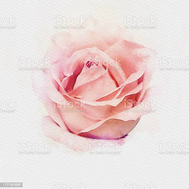 Pink pastel rose watercolor painting illustration picture id1127910397?b=1&k=6&m=1127910397&s=612x612&h=tirqm2xw cdzuuvyza21 kcj8wpayy9s5jv0fz1eeog=