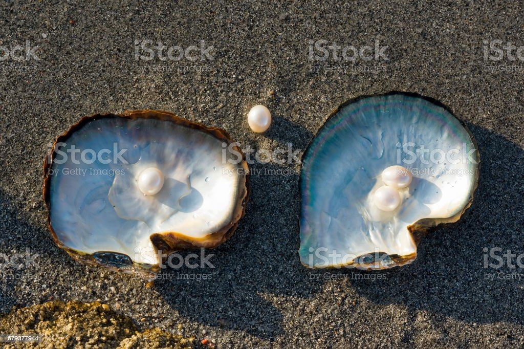 Pink Pearls and Oysters. stock photo