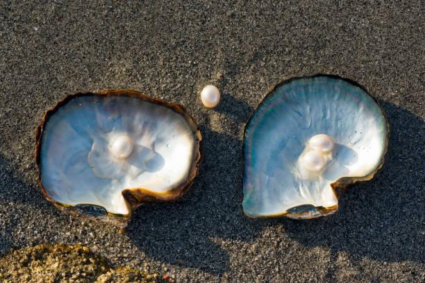 pink pearls and oysters. - muscheln zubereiten stock-fotos und bilder