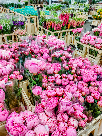Plenty of flowers ready for sale at wholesale floristic base
