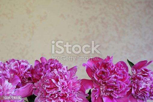 istock Pink peonies bouquet 1028778120