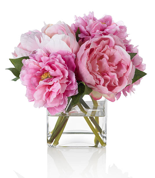 pink peonies on white background - vase stock pictures, royalty-free photos & images