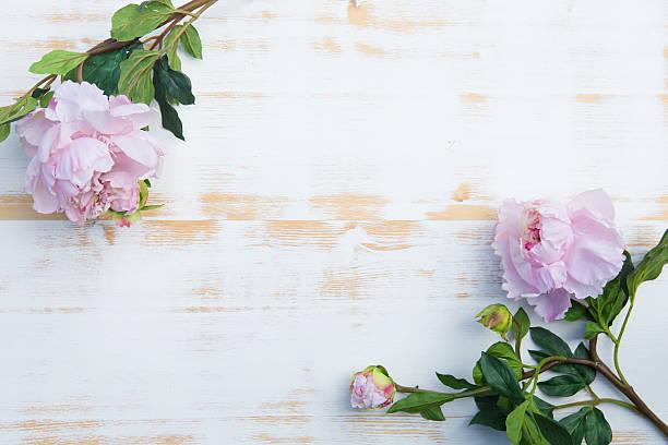 rosa pfingstrosen auf rustikalen holz-hintergrund weiß - verlobungsfeier einladungen stock-fotos und bilder