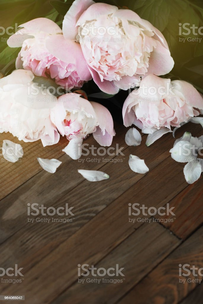 Pink Peoniess Spring summer bouquet Flat Lay Wooden Background Copy space. Beautiful Pik Fresh Flowers. - Royalty-free Adult Stock Photo