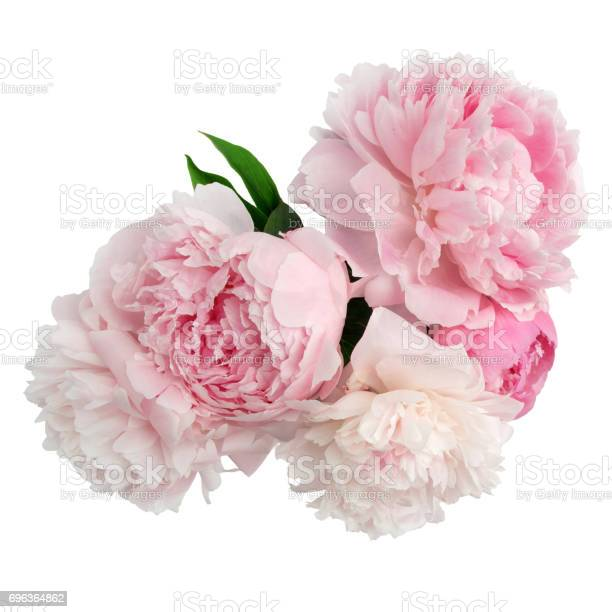 Pink peony flower isolated on white background picture id696364862?b=1&k=6&m=696364862&s=612x612&h=fizs6vtmxrleon1jnpoipdfyjlodforr8dktpynzz6u=
