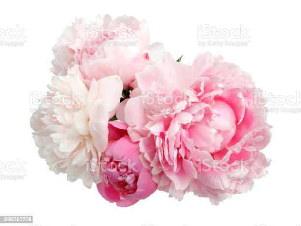 Pink peony flower isolated on white background picture id696365206?b=1&k=6&m=696365206&s=612x612&h=tfgqsjykgb53kf4u9icvfiocuuwwezuv1ovvvrd fn0=