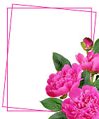 istock Pink peony flowers and buds in a corner floral arrangement  with a frame 1192225428