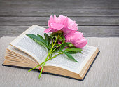 Pink peony flowers on old book
