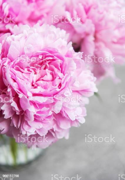 Pink Peony Flowers — стоковые фотографии и другие картинки Без людей