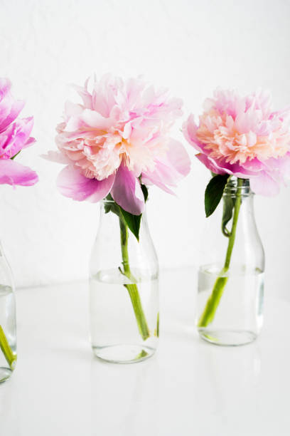 rosa pfingstrose in einer glasvase flasche - vase glas stock-fotos und bilder