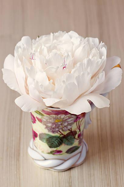 rosa pfingstrose in der cup - indoor feen gärten stock-fotos und bilder