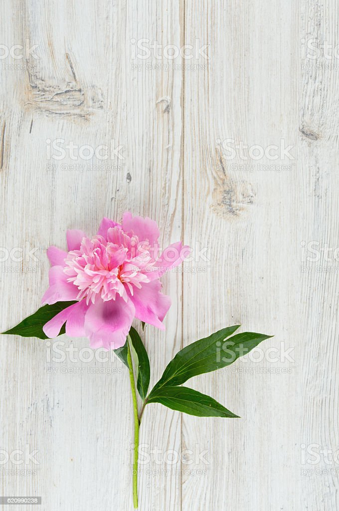 pink peony on wooden surface foto royalty-free