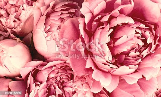 Pink peony petals blossom flowers beautiful background wallpaper
