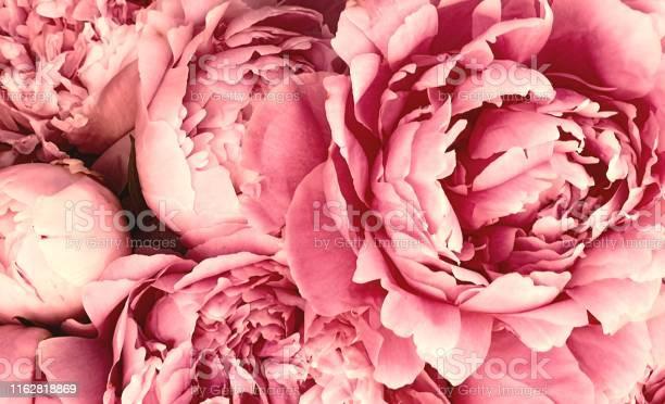 Photo of Pink peony petals blossom flowers