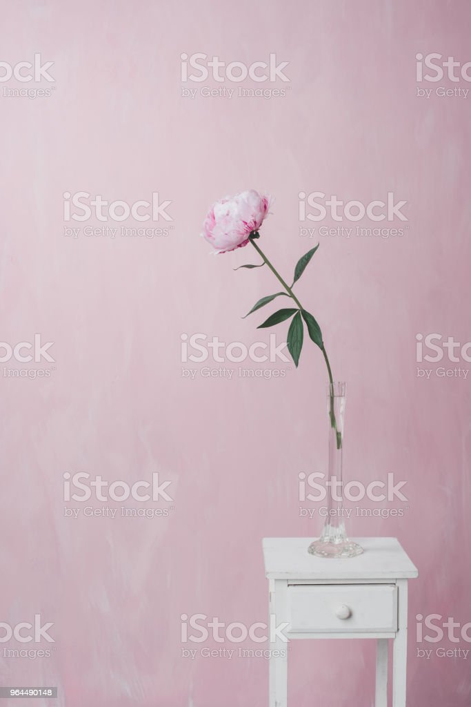 Pink peony stands on a white vintage pedestal on a pink background stock photo