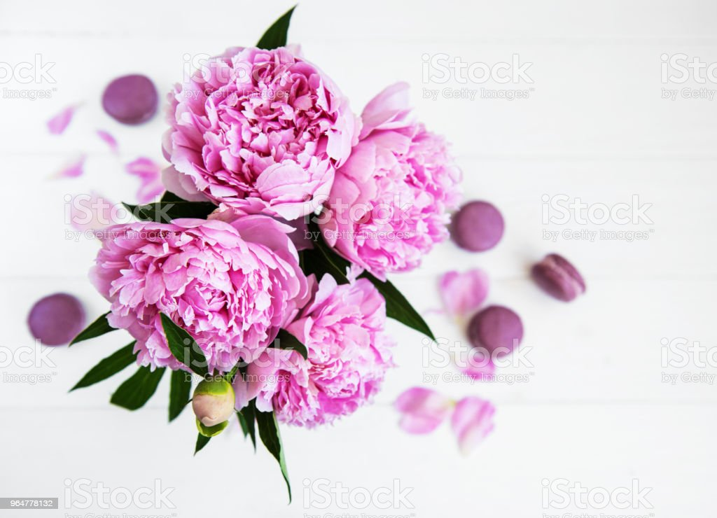 Pink peony with macarons royalty-free stock photo