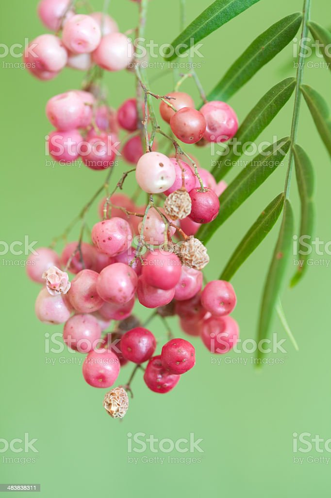 Pink Pepper Tree (Schinus) Berries and Green Leaves stock photo