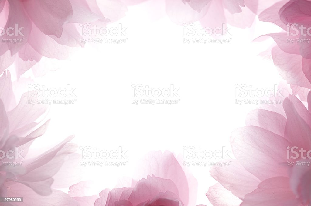 Pink petals outlined as a frame royalty-free stock photo