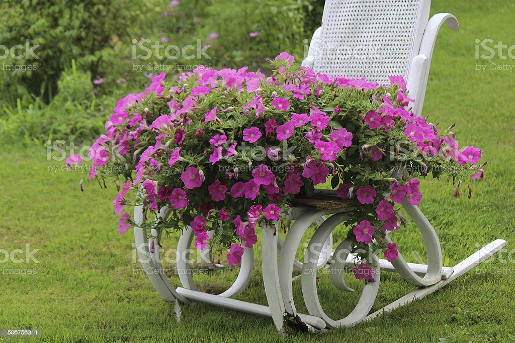 Pink Petunias on White Metal Rocking Chair stock photo