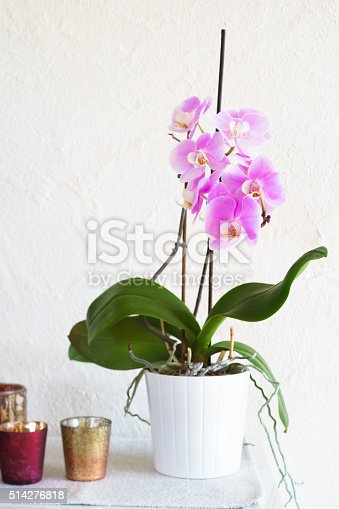 Pink potted phalaenopsis on white table against white stucco wall. Selective focus on flowers.