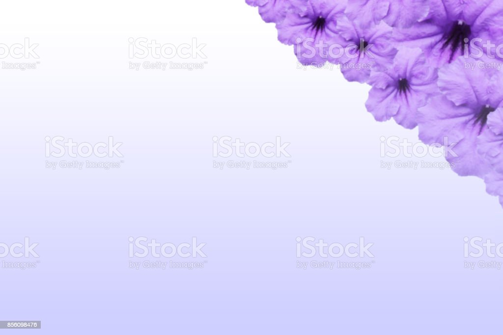 Pink Phalaenopsis orchids flower isolated on colorful background. stock photo