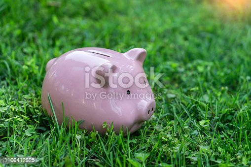 Pink piggy bank on the lawn