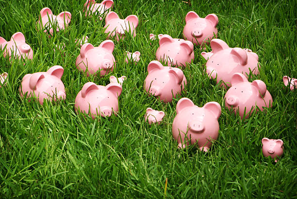 Pink Piggys in Green Grass stock photo