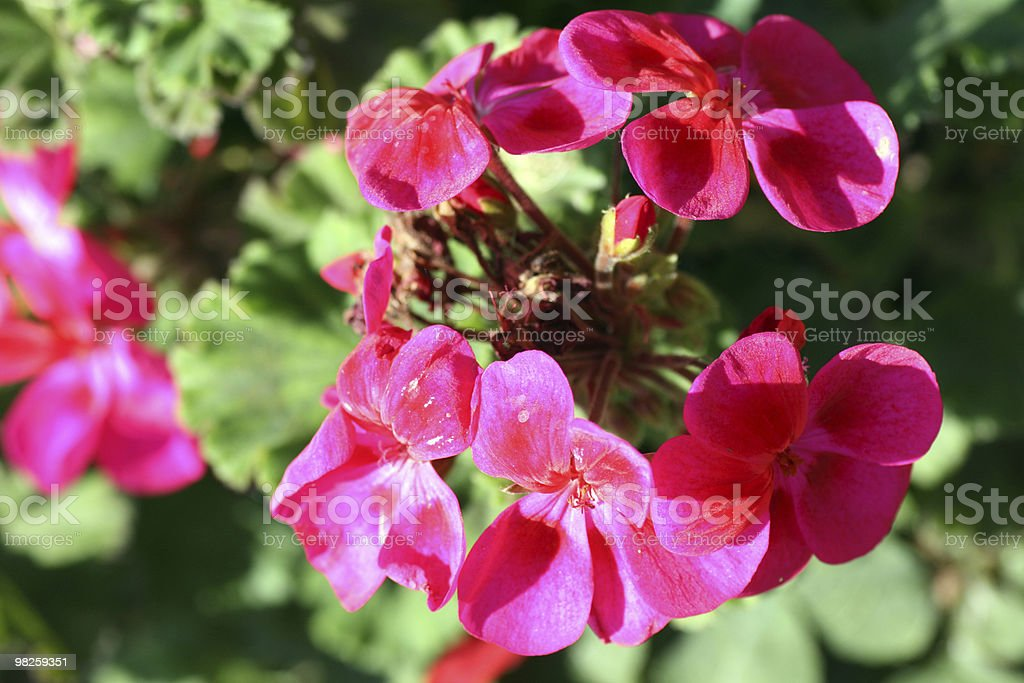 Pink Plants royalty-free stock photo