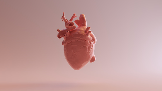 Pink Porcelain Anatomical Heart 3d illustration 3d render