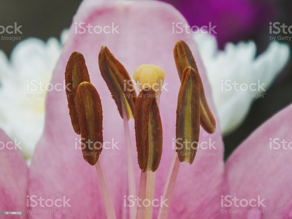 Pink Pretty Flowers On Cloudy In Autumn Stock Photo More Pictures