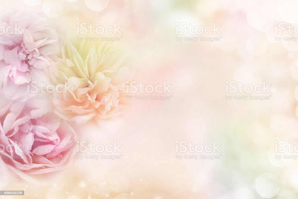 pink purple and yellow roses background pastel tone for valentine – Foto