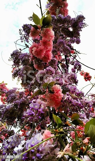 istock Pink purple flowers background 1129332831