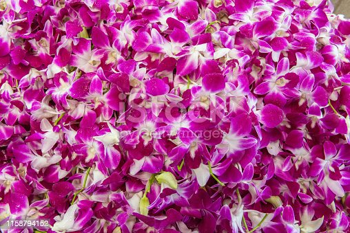Profusion of Pink, Purple, White Thai Orchid flowers displayed for sale at the Bangkok Flower Market, Thailand. In Thai Culture the flowers are often used as religious offerings.