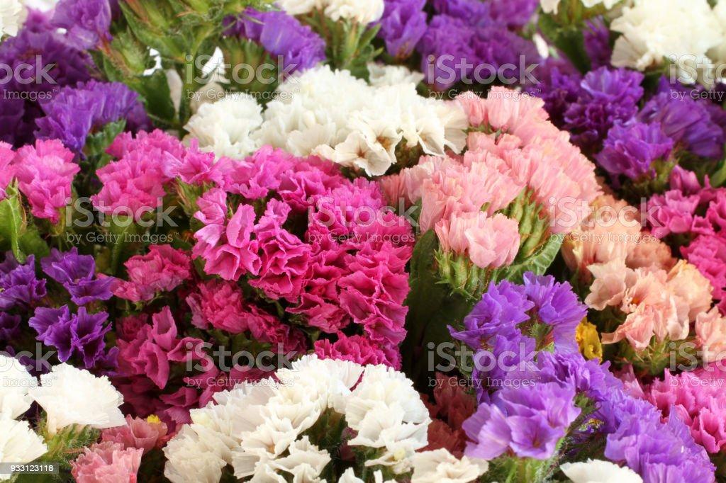 Pink, purple, yellow, white Statice flowers  -  Limonium Background stock photo