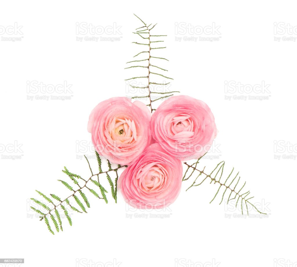 Pink ranunculus flower floral decoration flat lay royalty-free stock photo