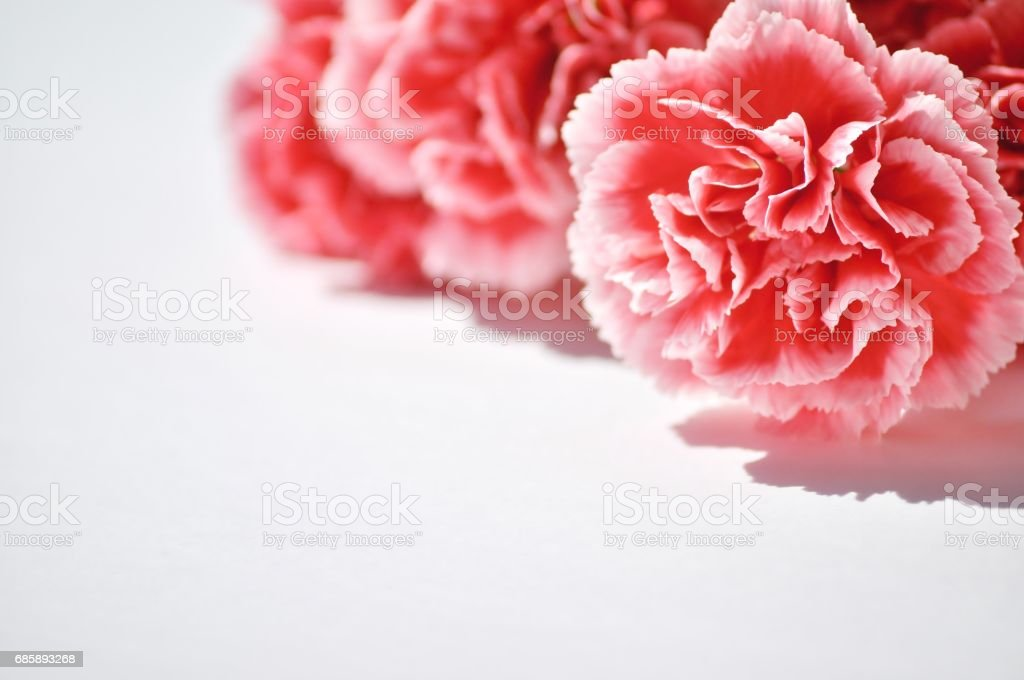 Pink, romantic flowers with copy space. stock photo