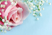 Pink Rose and Baby's Breath